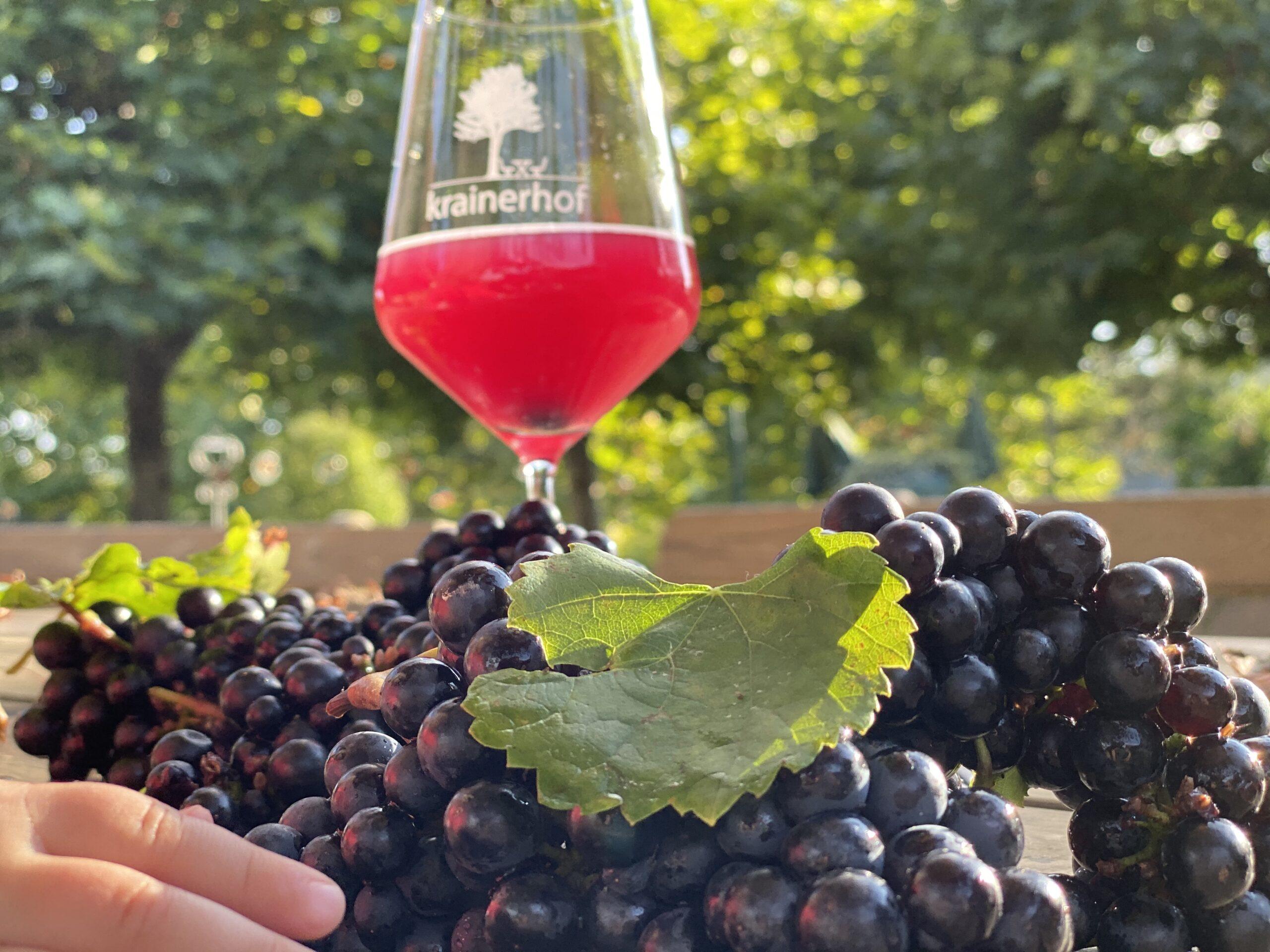 Winzer des Monats Oktober 2021: Weingut Krainerhof