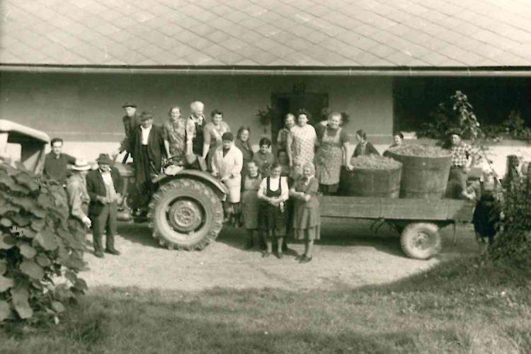 Weinlese_50erJahre_Traktor
