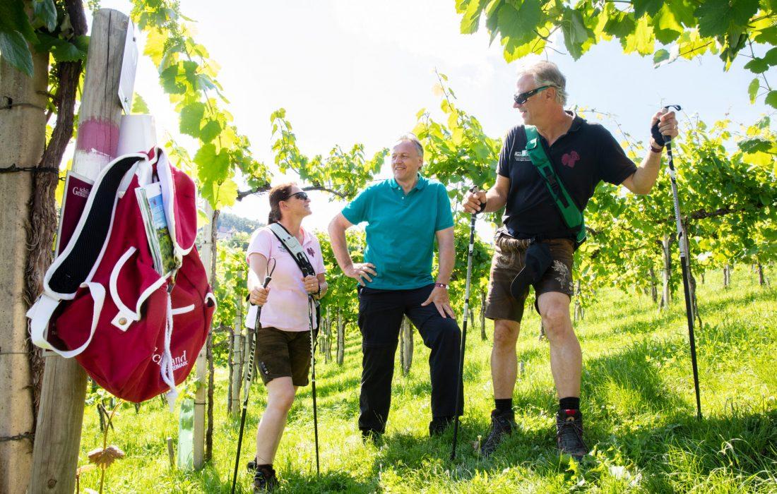 Wanderer mitten in den Weinbergen im Schilcherland